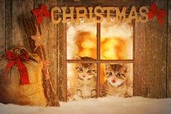 Kätzchen mit zwei Jungen, das neugierig aus einem Fenster heraus schaut Stockfotos