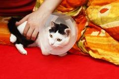 Kätzchen nach erfolgreicher Operation Stockfotos