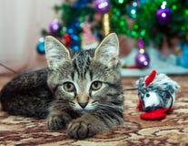 Kätzchen nahe bei einer Spielzeugmaus Lizenzfreies Stockfoto