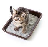 Kätzchen oder Katze im Toilettenbehälterkasten mit der saugfähigen Sänfte lokalisiert Lizenzfreie Stockfotografie