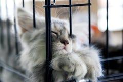 Kätzchen schlafend Stockbild