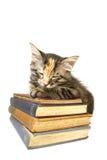 Kätzchen schlafend auf alten Büchern Stockbild