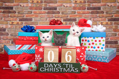 Kätzchen sechs Tage bis Weihnachten Stockbild