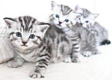 Kätzchen sind gestreift stockfoto