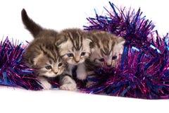 Kätzchen spielen mit einem Filterstreifen stockfotos