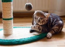 Kätzchen spielt mit Maus Stockfoto