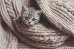Kätzchen steht auf einer Decke still Lizenzfreie Stockfotos