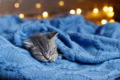 Kätzchen steht auf einer Decke still Stockbild