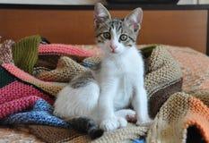 Kätzchen stricken ein Decke mit der Hand Stockbild