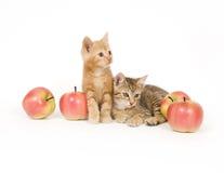 Kätzchen und Äpfel Stockfotografie