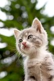 Kätzchen und Baum Lizenzfreies Stockbild