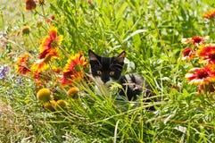 Kätzchen und Blumen Stockfotografie