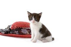 Kätzchen und ein roter Strohhut stockfotografie