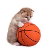 Kätzchen und eine Basketballkugel Lizenzfreies Stockbild