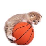 Kätzchen und eine Basketballkugel Lizenzfreies Stockfoto