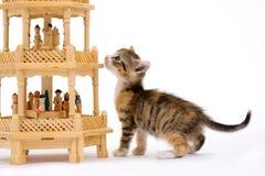 Kätzchen und eine Pyramide lizenzfreie stockfotografie