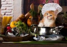 Kätzchen und Fische frisch in der Küche Lizenzfreie Stockbilder