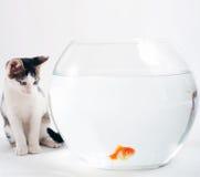 Kätzchen und Goldfish Stockfotografie