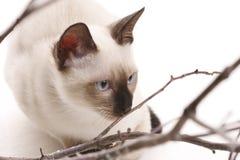 Kätzchen und hölzerne Steuerknüppel Stockbilder