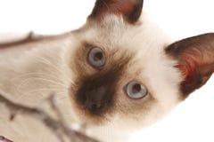 Kätzchen und hölzerne Steuerknüppel Lizenzfreies Stockfoto