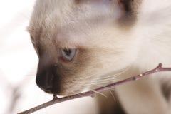 Kätzchen und hölzerne Steuerknüppel Lizenzfreie Stockbilder
