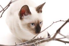 Kätzchen und hölzerne Steuerknüppel Lizenzfreie Stockfotos
