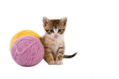 Kätzchen und irgendeine Kugel der Garne lizenzfreies stockfoto
