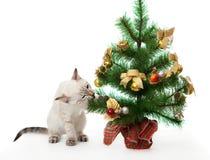 Kätzchen und künstlicher Weihnachtsbaum. Stockbilder