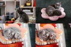 Kätzchen und Kissen, multicam, Gitter 2x2 Stockbild