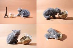 Kätzchen und Mutterkatze, die Nahrung für Haustiere vom Boden, multicam, Schirm des Gitters 2x2 isst Stockbild