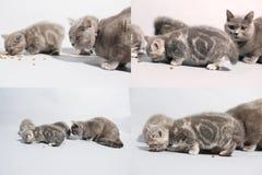 Kätzchen und Mutterkatze, die Nahrung für Haustiere vom Boden, multicam, Schirm des Gitters 2x2 isst Stockbilder
