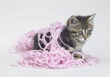 Kätzchen und rosa Wolle Lizenzfreie Stockbilder
