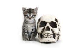 Kätzchen und Scull Stockfotografie