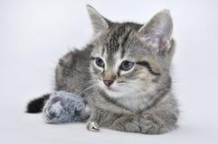 Kätzchen- und Spielzeugmaus Stockbild