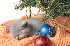 Kätzchen-und Weihnachtsbaum Lizenzfreies Stockbild