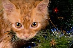 Kätzchen- und Weihnachtsbaum Stockfotografie