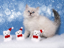 Kätzchen und Weihnachtsdekor im Schnee Stockbild