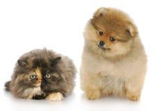 Kätzchen und Welpe Stockfoto