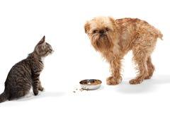 Kätzchen und Welpe Lizenzfreie Stockbilder