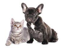 Kätzchen und Welpe Lizenzfreies Stockfoto
