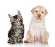 Kätzchen und Welpe Stockfotografie