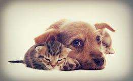 Kätzchen und Welpe Stockfotos