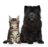 Kätzchen und Welpe auf Weiß Stockfotos