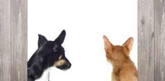 Kätzchen und Welpe, die zurück schauen Lizenzfreie Stockfotos
