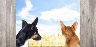 Kätzchen und Welpe, die zurück schauen Stockfotos