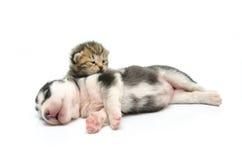 Kätzchen- und Welpenschlaf auf weißem Hintergrund Lizenzfreies Stockfoto