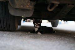 Kätzchen unter Autorad Stockfoto