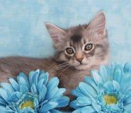 Kätzchen unter blauen Blumen Stockbild