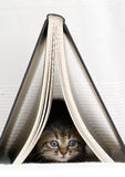 Kätzchen unter Buch Stockfotografie