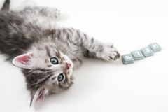 Kätzchen wünscht Hilfe stockbild